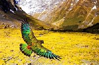 Wildes Neuseeland: Im Reich der Extreme