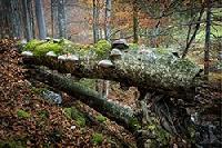 Zurück zum Urwald: Der Nationalpark Kalkalpen